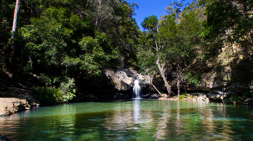 Walk the Kondalilla Falls Circuit