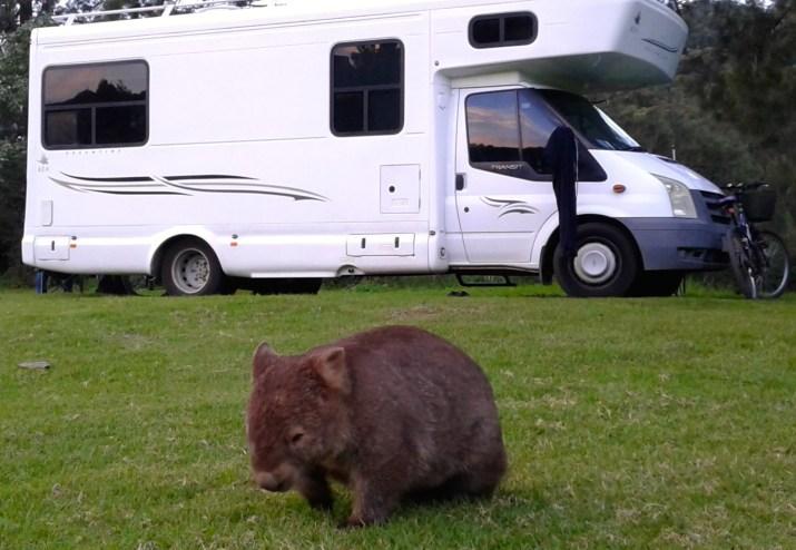 wombat 4