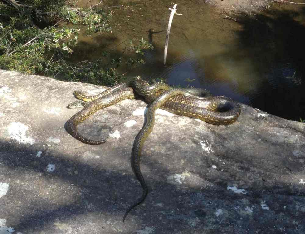 2 Snake 2