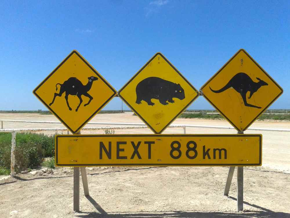 animal sign 2