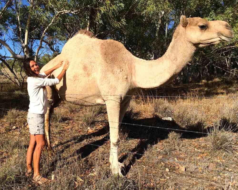 camel 4