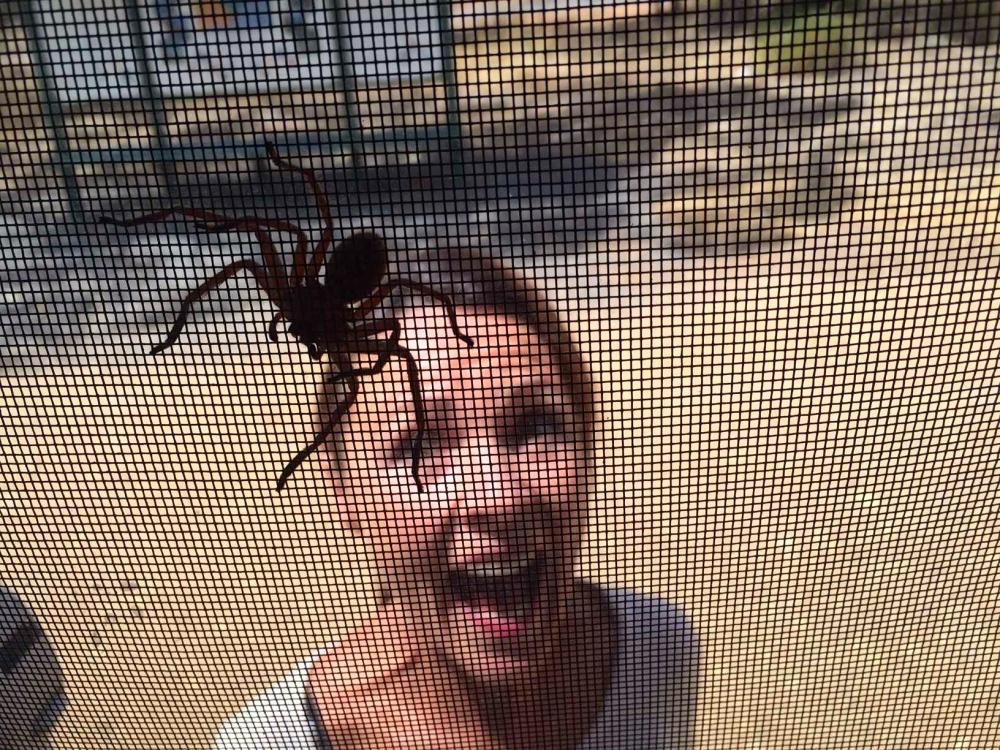 spider 6