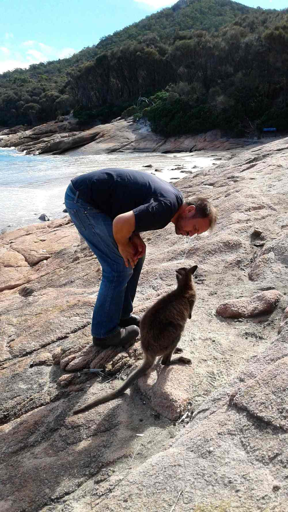 wallaby 13